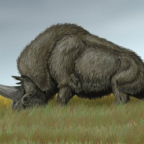 Siberian unicorn was a unique species (and we hung out)