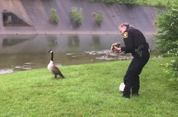 Mother goose calls 911 (not really)