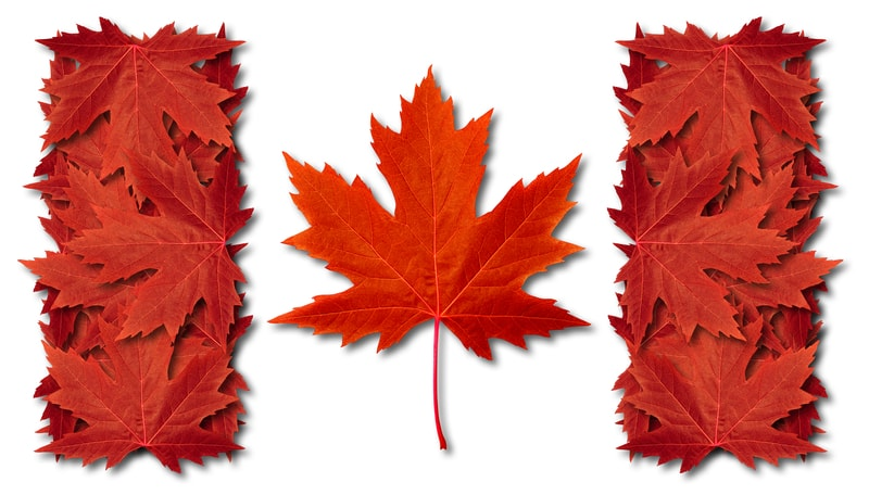 Canadian flag with leaves