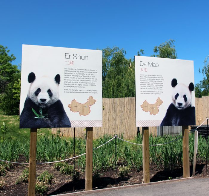 OWLconnected Reporter Noah talks giant pandas at the zoo