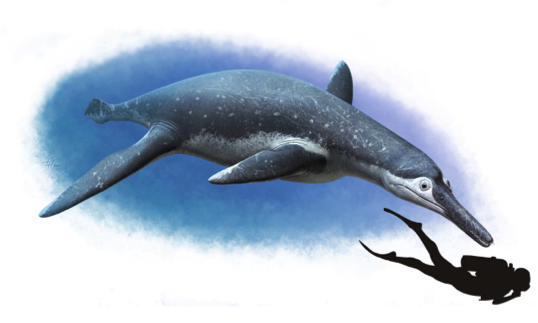 pliosaur fossil reconstruction