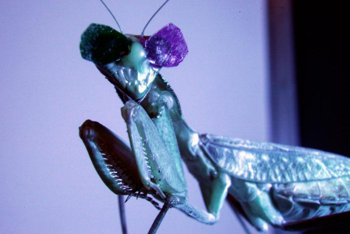 3D glasses on a praying mantis is the best thing