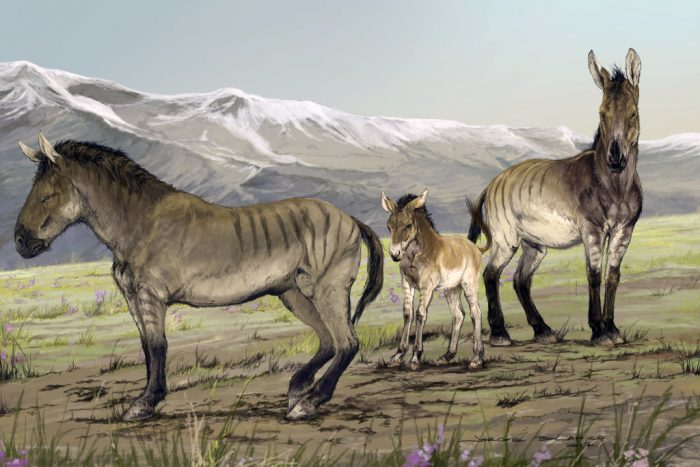 Look what we found! Utah family finds ancient horse fossil in backyard