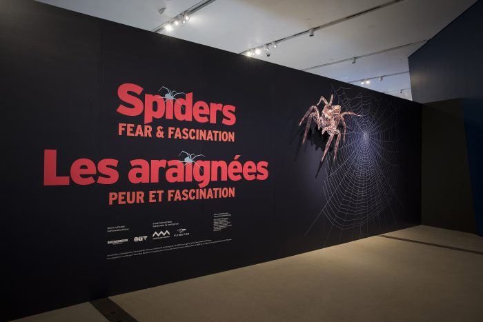 Spiders take over the museum!