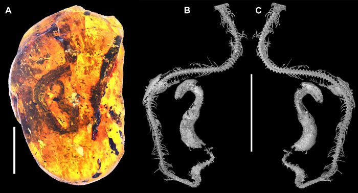 Baby snake fossil in amber is the first of its kind