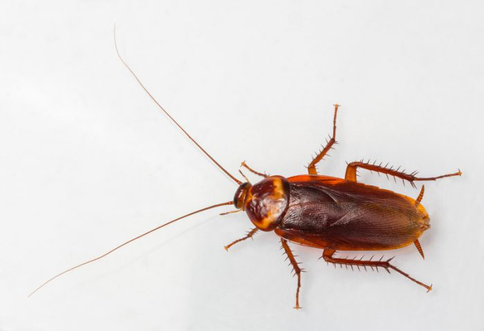 The cockroach is almost indestructible. Can we be, too?