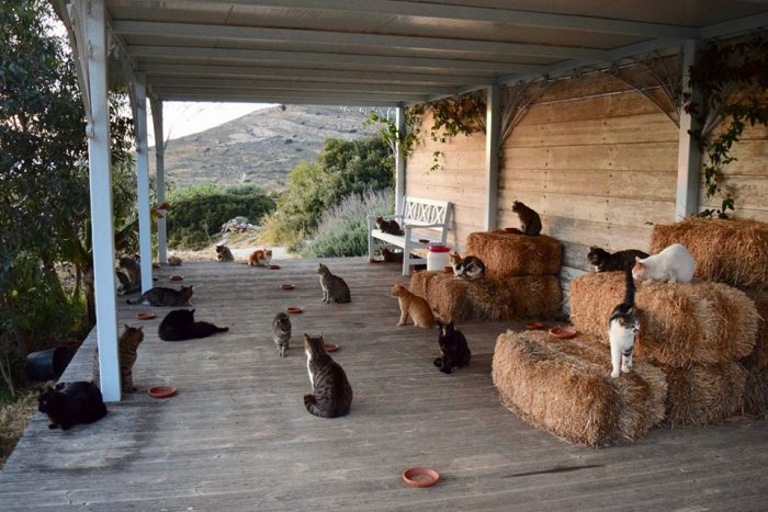 The best cat lover job ever is on this Greek island
