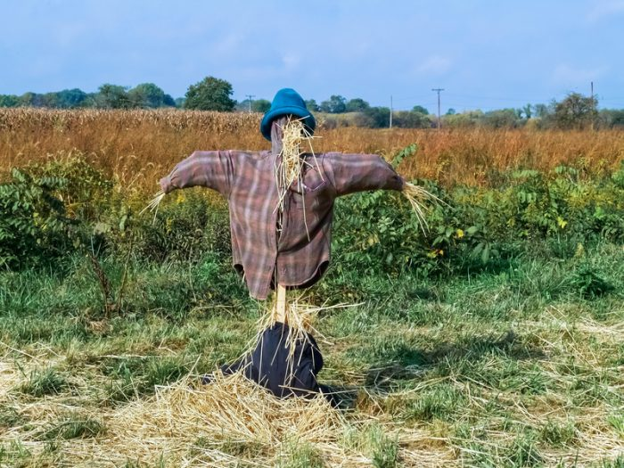 'Move over scarecrows, hello lasers!' say farmers
