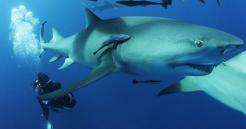 MOVIE PREVIEW AND INTERVIEW: Sharkwater Extinction