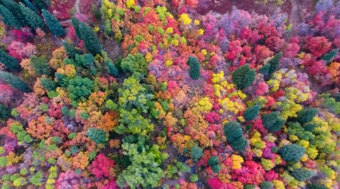 Watch autumn colours come to life!