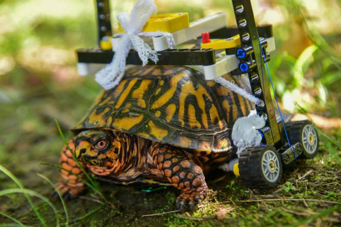 lego wheelchair turtle