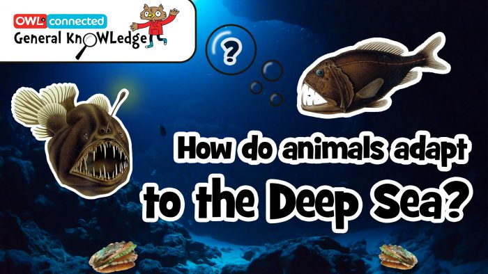 General KnOWLedge: How do animals adapt to the deep sea?