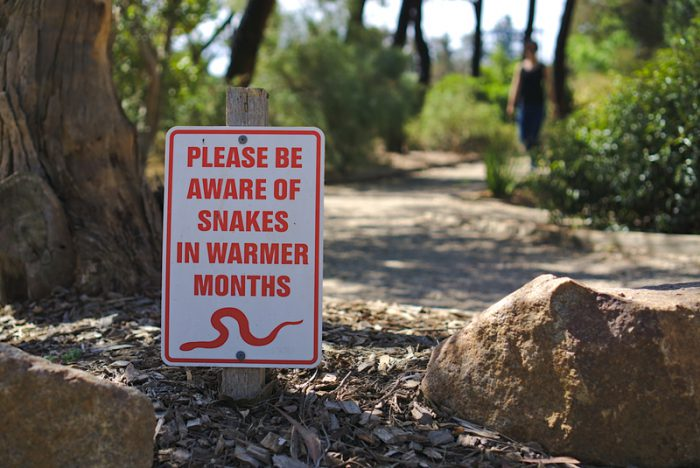 Australian snakes are beating the heat in people's bathrooms