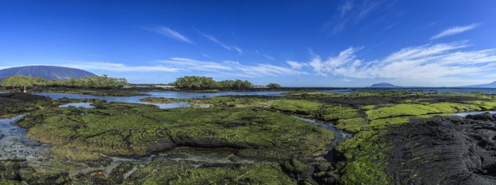 Fernandina giant tortoise landscapes galapagos islands