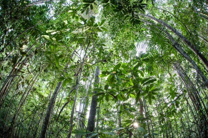 Scientists listen to rainforest sounds to check biodiversity