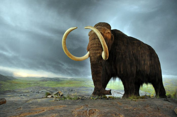 Scientists wake cells of 28,000 year-old woolly mammoth