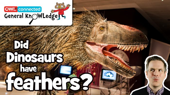 General KnOWLedge: Did dinosaurs have feathers?