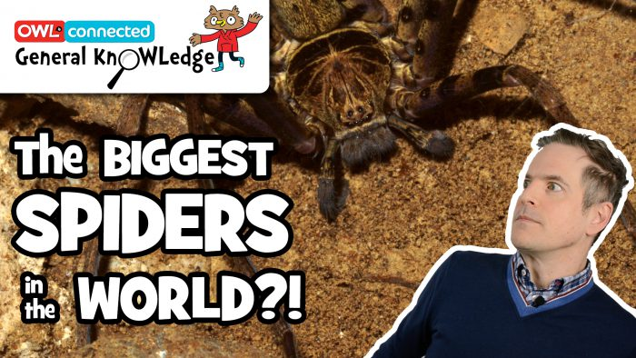 General KnOWLedge: What is the world's biggest spider?