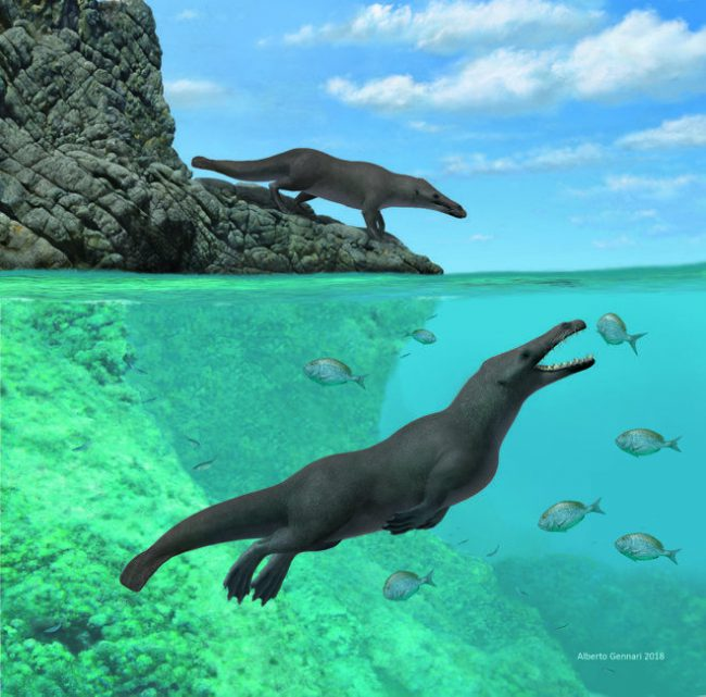 Whale ancestor discovered in South America