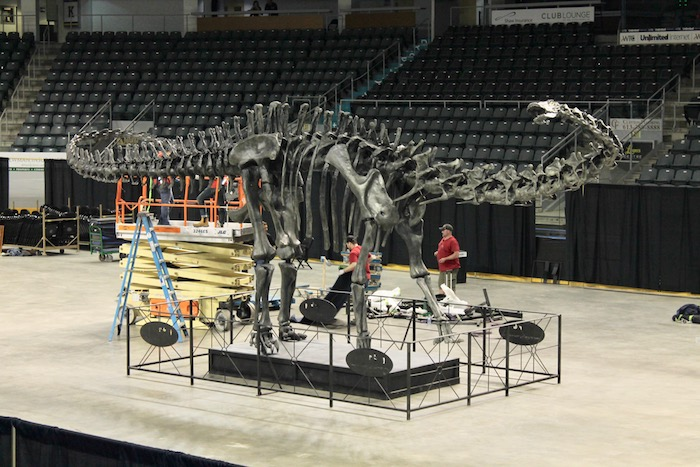 PHOTO DIARY: We watched a Diplodocus get built!