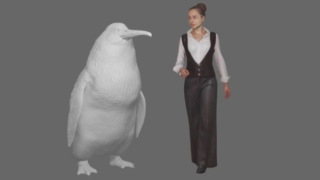 big birds penguin