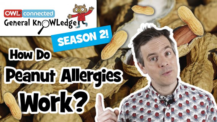 General KnOWLedge: How do peanut allergies work?
