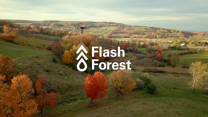 flash forest