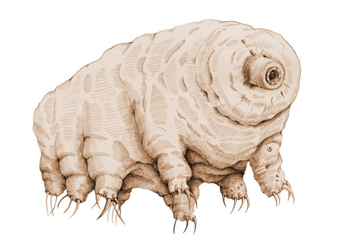 Breaking news: Water bears have a weakness!