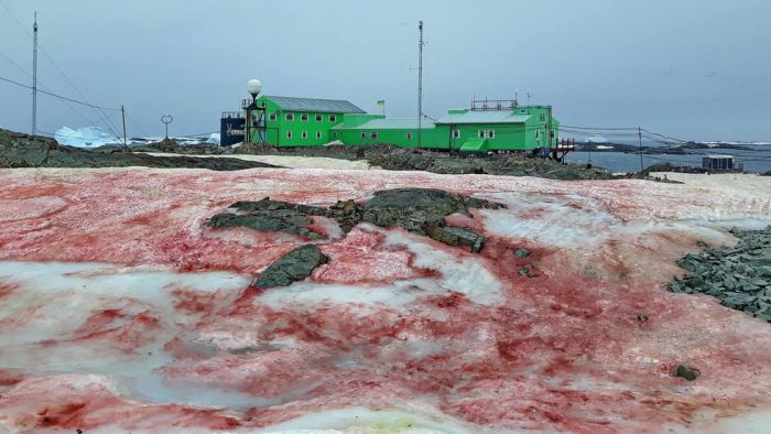 Blood snow? A new island? Antarctica is happening!