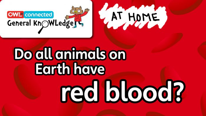 General KnOWLedge At Home: Do all animals have red blood?