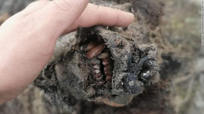 30,000 year-old extinct cave bear remains found in Siberia