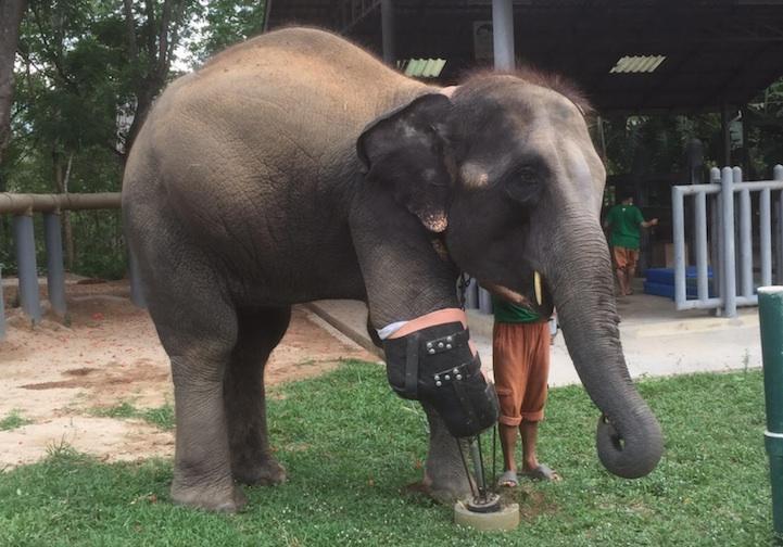 Mosha elephant leg