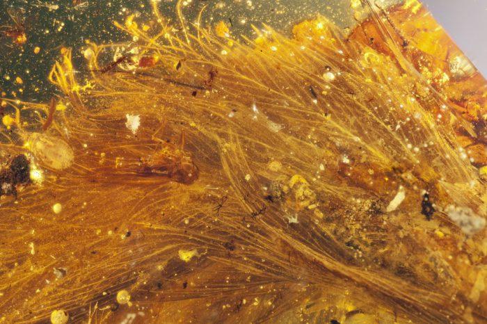 dinosaur amber