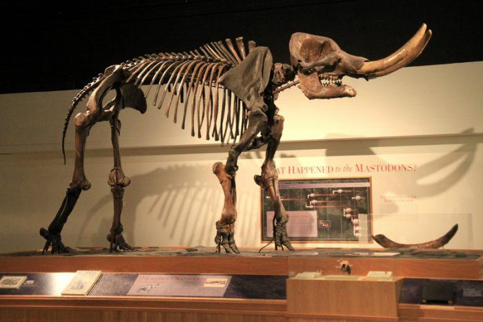 mastodon humans 100,000 years