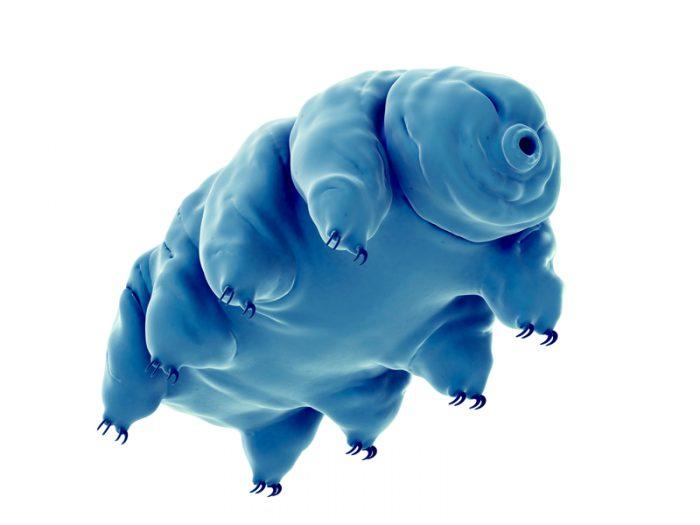 tardigrade water bear