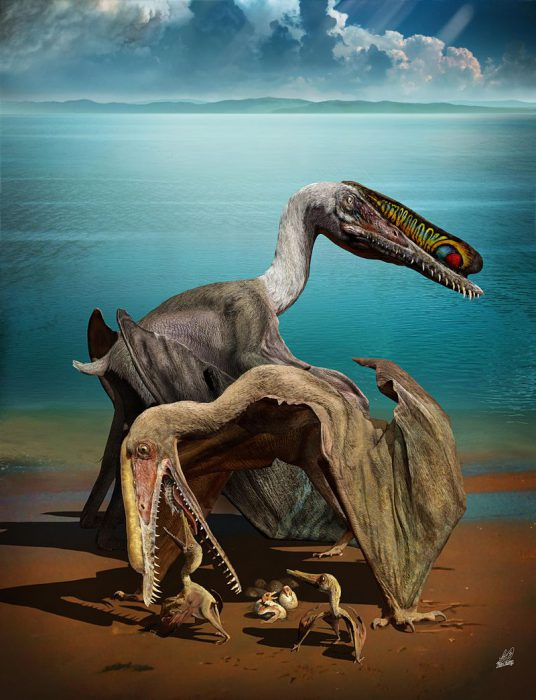 pterosaur eggs_Zhao_chuang