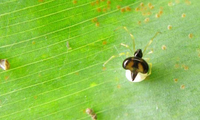 social spider chikunia bilde