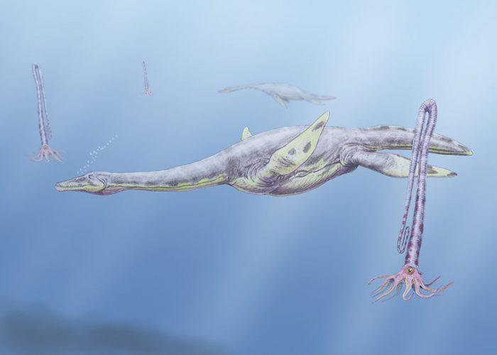 elasmosaurid