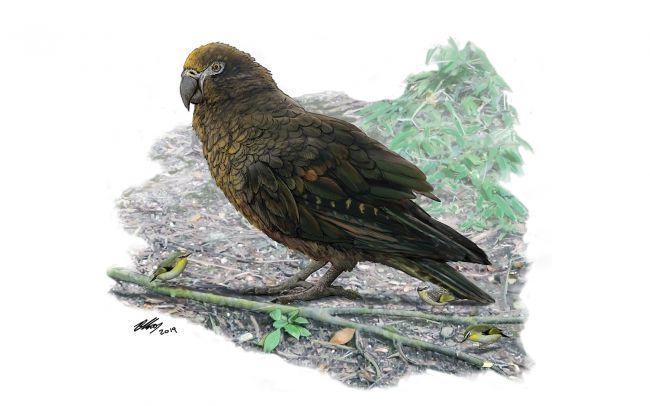 big birds parrot