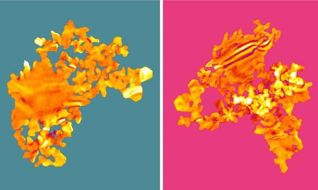 nanoseaweed gold