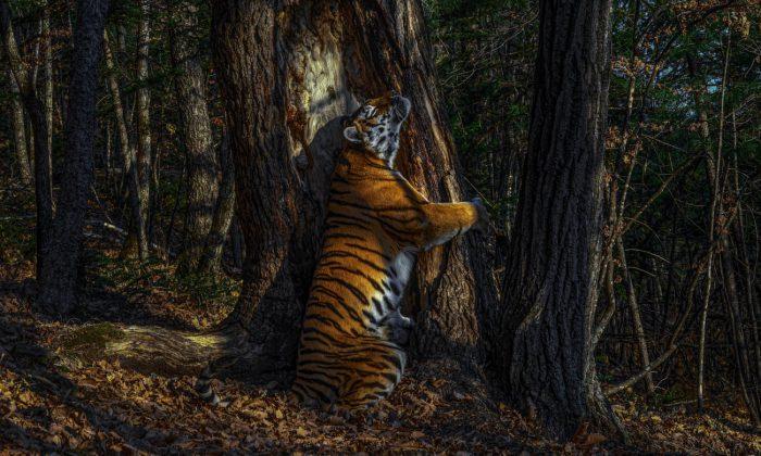 2020 wildlife photographer of the year