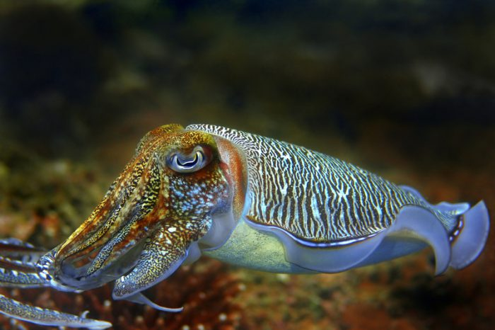 A story of marshmallows and cuttlefish