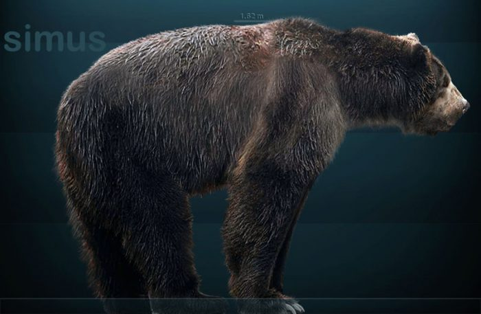 Science Odyssey Begins: Contest and short-faced bear DNA!