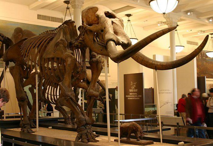 mastodon poop
