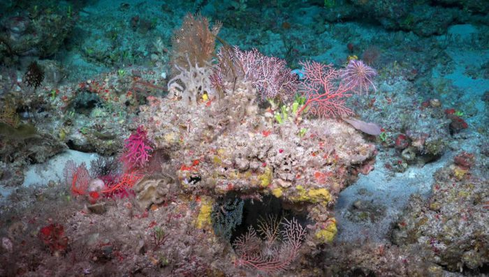 Visiting mesophotic coral reefs