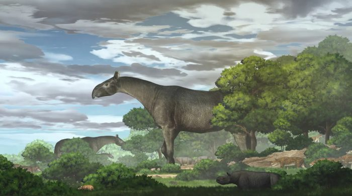 giant prehistoric rhino