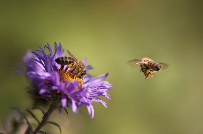 Do bees really know how to unscrew a bottle cap?