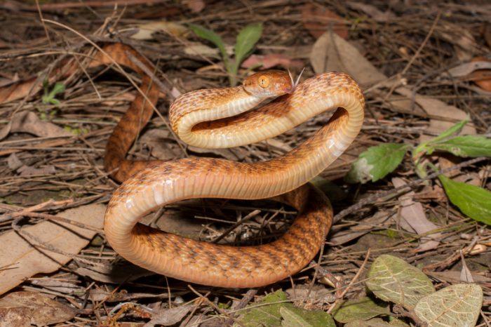 Watch this tree snake twist itself into a lasso to climb pole