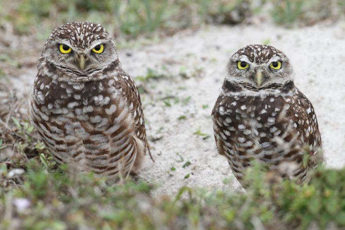 Watch: Doorbell camera captures three adorable owls