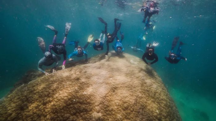 This 400-year-old coral is a Great Barrier Reef superstar